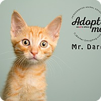 Adopt A Pet :: Mr. Darcy - Friendswood, TX