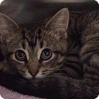 Adopt A Pet :: Raziel - Bridgewater, NJ
