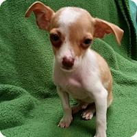 Adopt A Pet :: Alex - Allentown, PA