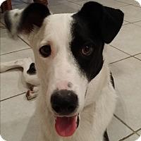 Adopt A Pet :: FENN (Courtesy List) - San Pedro, CA