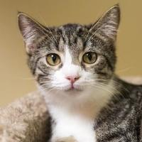 Adopt A Pet :: LaDonna - Elk Grove Village, IL