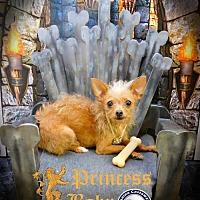 Adopt A Pet :: Baby - Arcadia, FL