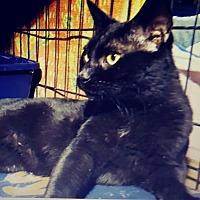Adopt A Pet :: Merlin - Trevose, PA