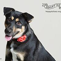 Adopt A Pet :: Katie - Chandler, AZ