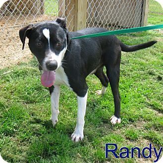 Border Terrier Mix Dog for adoption in East Hartford, Connecticut - RANDY meet me 5/3