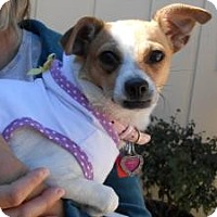 Adopt A Pet :: Zoey - New Milford, CT
