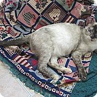 Adopt A Pet :: Livinia (Livvy) - Mobile, AL