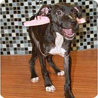 Adopt A Pet :: Willow - Rowlett, TX