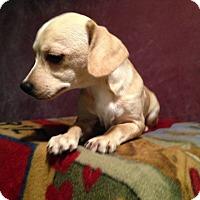Adopt A Pet :: Bonnie - Toledo, OH