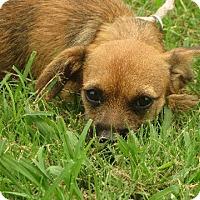 Adopt A Pet :: JJ - Greenville, RI