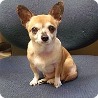 Adopt A Pet :: Pee Wee - Muskegon, MI