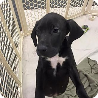 Hound (Unknown Type) Mix Puppy for adoption in Nesquehoning, Pennsylvania - Whiskey