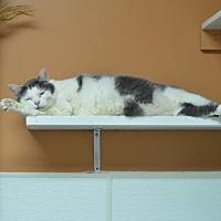 Adopt A Pet :: Ollivander151181 - Atlanta, GA