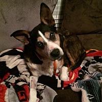 Adopt A Pet :: SweetBaby - Alpharetta, GA