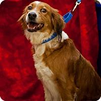 Adopt A Pet :: Sadie - Erwin, TN