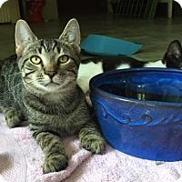 Adopt A Pet :: Archer - Spencer, NY