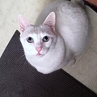 Adopt A Pet :: Lily - Medford, NJ