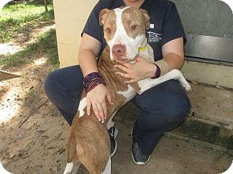Bulldog Mix Dog for adoption in Tallahassee, Florida - Jack