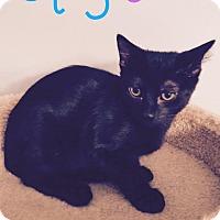 Adopt A Pet :: Chewy - Jackson, NJ
