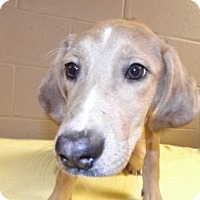 Adopt A Pet :: Bambi - Foster Care - Oxford, MS