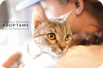 Domestic Shorthair Cat for adoption in Edwardsville, Illinois - Melody