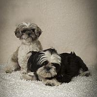 Adopt A Pet :: Marie & Corey - Davie, FL