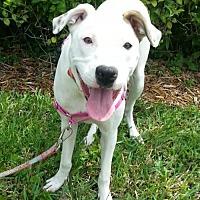 Adopt A Pet :: Izzy fka Cindy - Royal Palm Beach, FL
