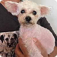 Adopt A Pet :: Tic Tac - Ft. Lauderdale, FL