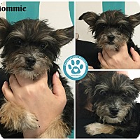 Adopt A Pet :: Mommie - Kimberton, PA