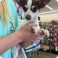 Adopt A Pet :: Bizzy (FORT COLLINS) - Fort Collins, CO