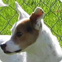 Adopt A Pet :: LEESA - Scottsdale, AZ