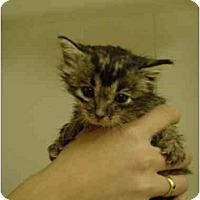 Adopt A Pet :: JC-05-5-1 - Davis, CA