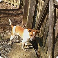 Adopt A Pet :: Coming soon:Cyrus - Delano, MN