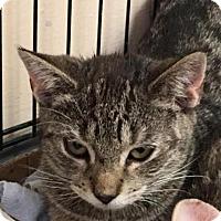 Adopt A Pet :: Candy - East Brunswick, NJ