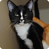 Adopt A Pet :: Courtney - Ridgeland, SC