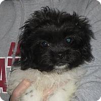 Adopt A Pet :: Edgar - Allentown, PA