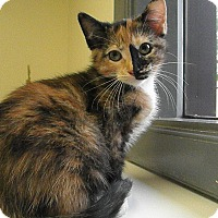 Adopt A Pet :: Bellatrix - Milwaukee, WI