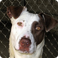 Adopt A Pet :: Luna - Ruidoso, NM