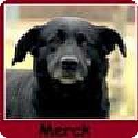Adopt A Pet :: Merck - Sullivan, IN