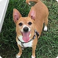 Adopt A Pet :: Francine - Wenatchee, WA