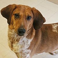 Adopt A Pet :: Elmo - Burlington, VT