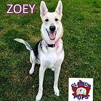 Adopt A Pet :: ZOEY - Strattanville, PA