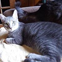 Adopt A Pet :: Casey - Williston Park, NY