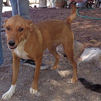Adopt A Pet :: Carina - Golden Valley, AZ