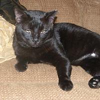 Adopt A Pet :: Mr Cuddles - Stafford, VA