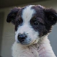 Adopt A Pet :: Whiskey Sour - Salt Lake City, UT