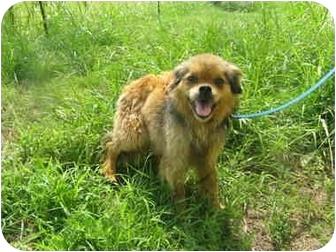 Terrier (Unknown Type, Medium) Mix Dog for adoption in Crandall, Texas - Ofelia