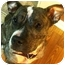 Photo 4 - American Pit Bull Terrier Mix Dog for adoption in Rochester/Buffalo, New York - Karma
