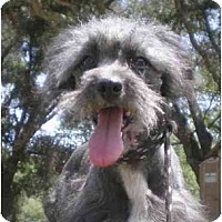 Adopt A Pet :: Gyro - Templeton, CA