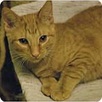 Adopt A Pet :: Quinn #2 - Lunenburg, MA